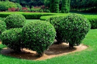 shrub tree planting care