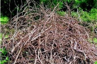 brush removal warren county